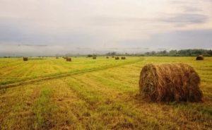 Земля под сенокос в собственность